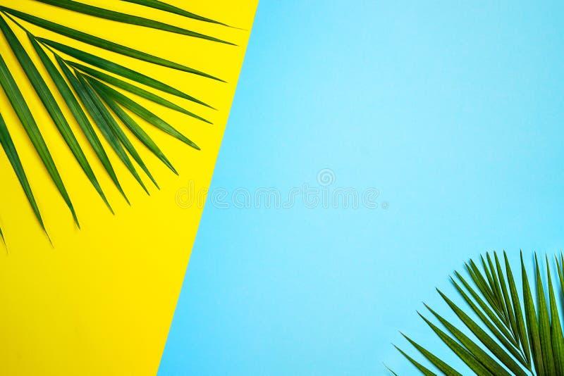 Foglie di palma verdi tropicali su fondo variopinto Colori gialli e blu fotografie stock