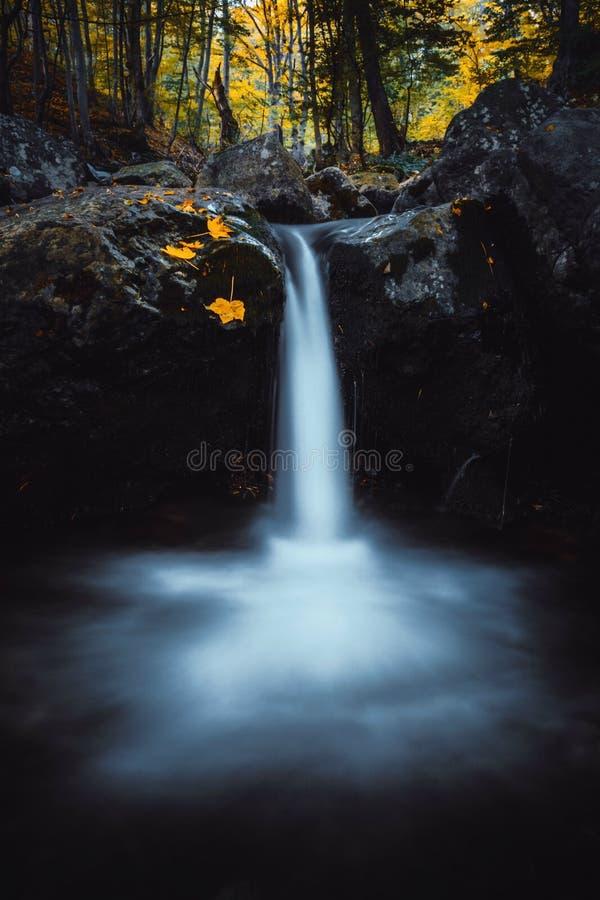 Foglie di rosso e di giallo cadute autunno in cascata sulla montagna di Vitosha fotografia stock