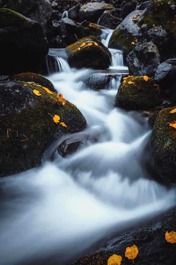 Foglie di rosso e di giallo cadute autunno in cascata sulla montagna di Vitosha fotografie stock libere da diritti