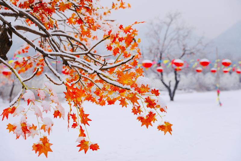 Foglie di rosso nella neve fotografie stock