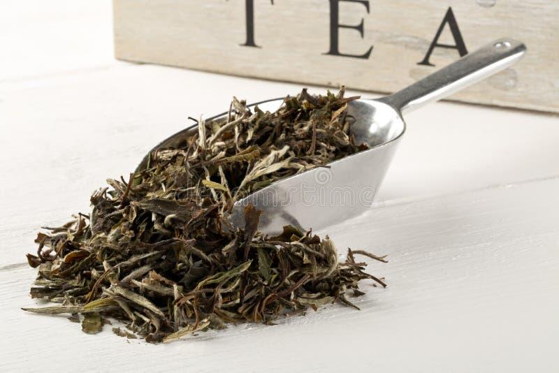 Foglie di tè bianche secche e crude in mestolo del metallo sopra il fondo di legno bianco della tavola immagine stock libera da diritti