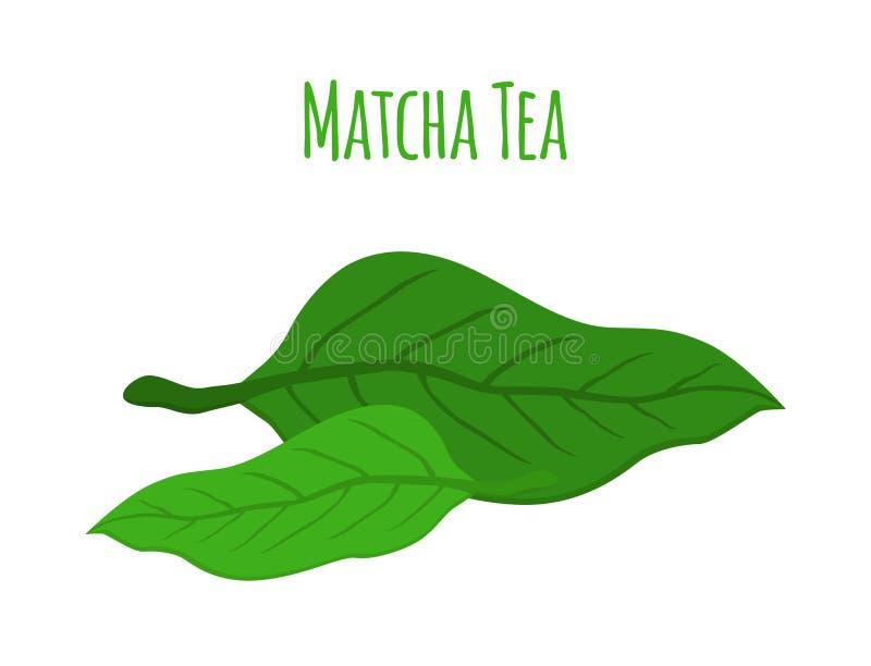 Foglie di tè di Matcha - bevanda japaneese, pianta organica naturale Stile piano illustrazione vettoriale