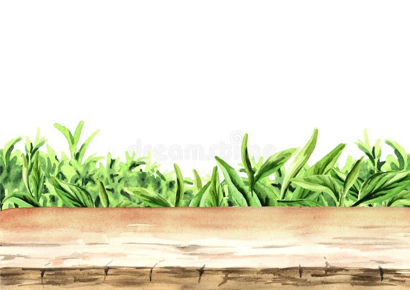 Foglie di tè fresche sulla piantagione di tè e sui precedenti vuoti Modello disegnato a mano dell'acquerello per la vostra proget illustrazione vettoriale