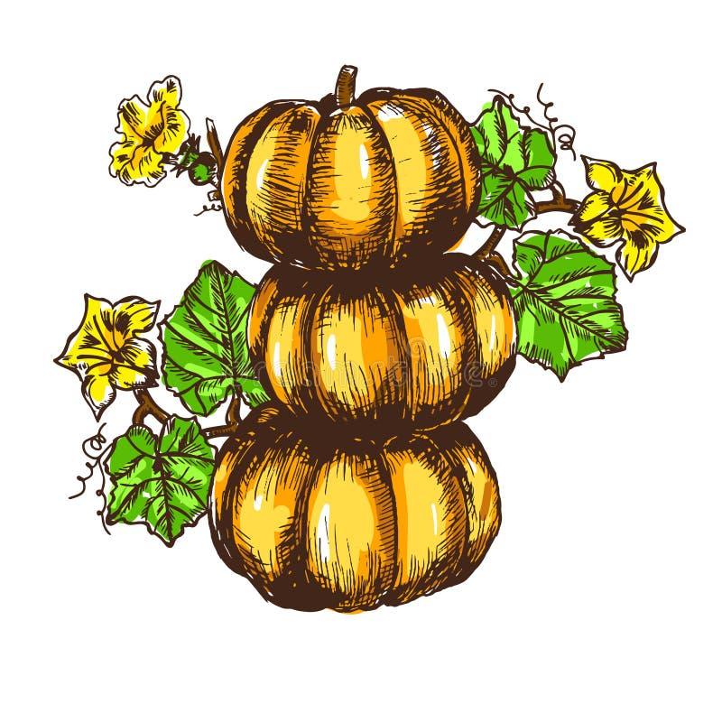 Foglie disegnate a mano della zucca di schizzo di vettore, fiori illustrazione vettoriale