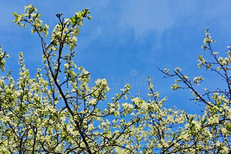 Foglie e fiori freschi in primavera fotografie stock