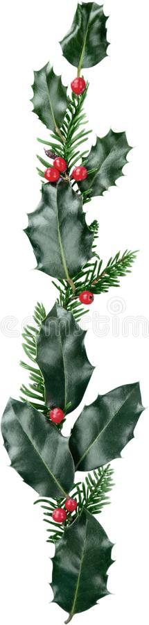 Foglie e frutti di aquifolium di Holly Ilex dell'europeo royalty illustrazione gratis