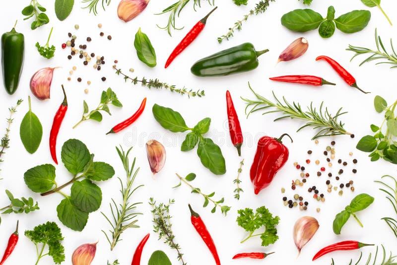 Foglie e peperoncino di erbe della spezia su fondo bianco Modello delle verdure Floreale e verdure su fondo bianco Vista superior immagine stock libera da diritti