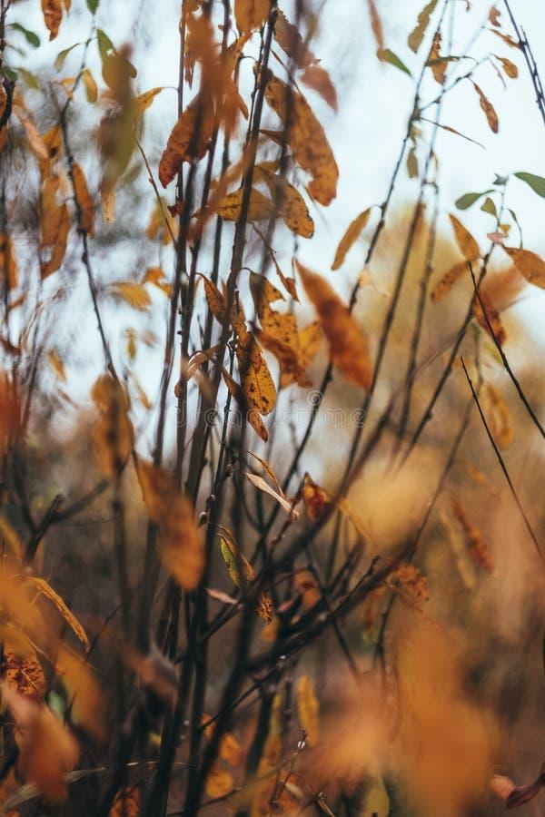 Foglie e rami giallo-arancio-rossi di autunno contro il cielo, sfuocatura Primo piano Retro stile fotografie stock libere da diritti