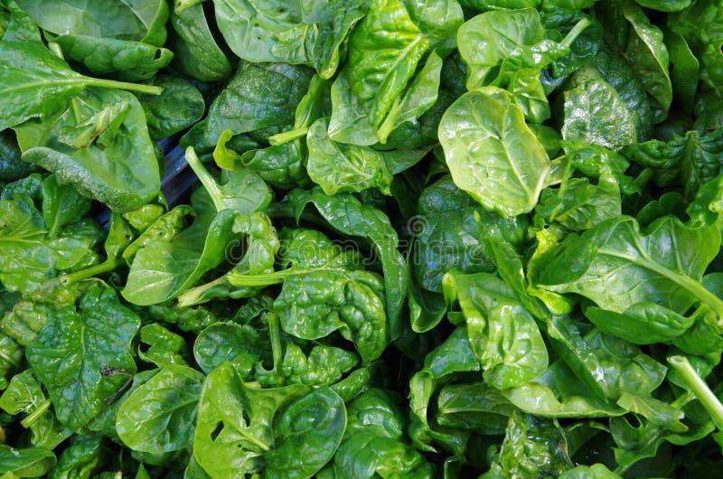 Foglie fresche degli spinaci macinati fotografia stock libera da diritti