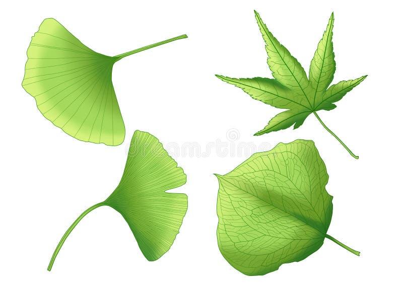 Foglie fresche della pittura verde della foglia su fondo bianco royalty illustrazione gratis