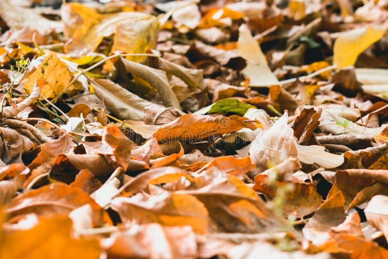 Foglie gialle di autunno fotografia stock libera da diritti