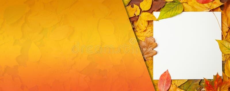 Foglie gialle di autunno ed etichetta in bianco quadrata per testo Concetto della vendita e degli sconti di autunno Modello fotografia stock libera da diritti