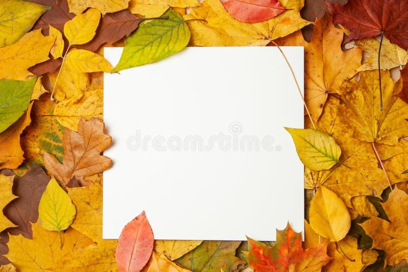 Foglie gialle di autunno ed etichetta in bianco quadrata per testo Concetto della vendita e degli sconti di autunno Modello immagine stock libera da diritti