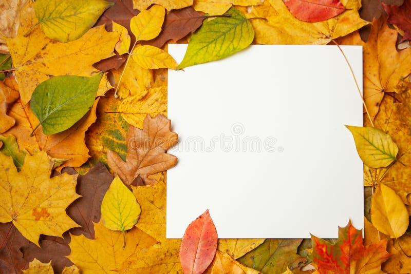 Foglie gialle di autunno ed etichetta in bianco quadrata per testo Concetto della vendita e degli sconti di autunno Modello immagine stock