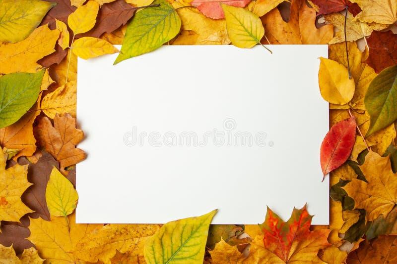Foglie gialle di autunno ed etichetta in bianco rettangolare per testo Concetto della vendita e degli sconti di autunno Modello immagini stock