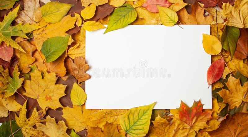 Foglie gialle di autunno ed etichetta in bianco rettangolare per testo Concetto della vendita e degli sconti di autunno Modello fotografie stock libere da diritti