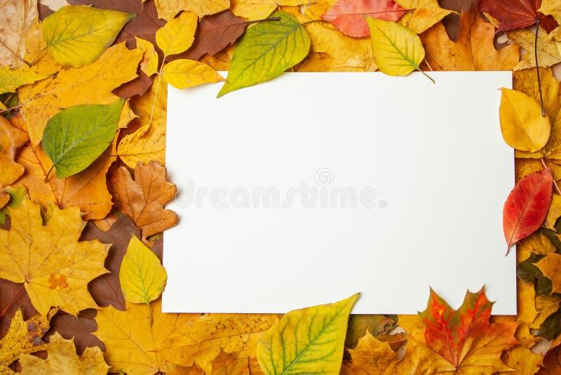 Foglie gialle di autunno ed etichetta in bianco rettangolare per testo Concetto della vendita e degli sconti di autunno Modello fotografia stock libera da diritti