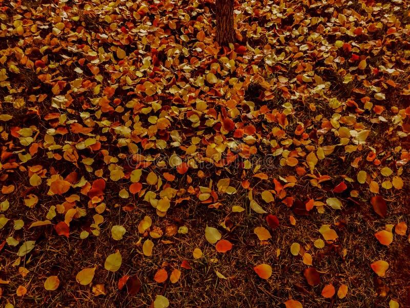 Foglie gialle e rosse del autmn sui precedenti variopinti al suolo immagini stock libere da diritti