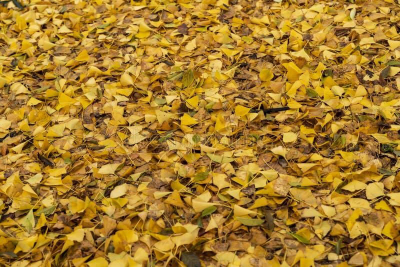 Foglie gialle nei giardini di Kew nell'inverno/autunno immagini stock