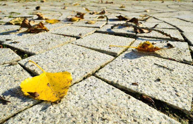 Foglie gialle, rosse, dorate e marroni sulla terra fotografia stock