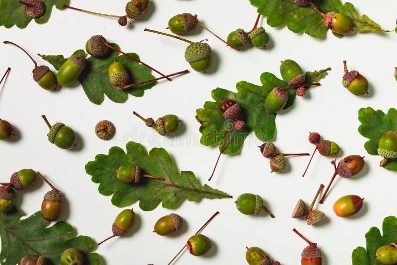 Foglie isolate della quercia con le ghiande immagini stock