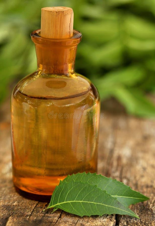 Foglie medicinali del neem con olio essenziale immagini stock libere da diritti