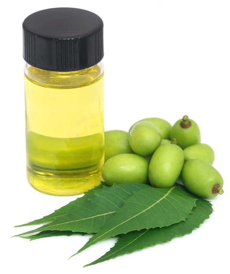Foglie medicinali e frutti del neem con olio essenziale immagini stock