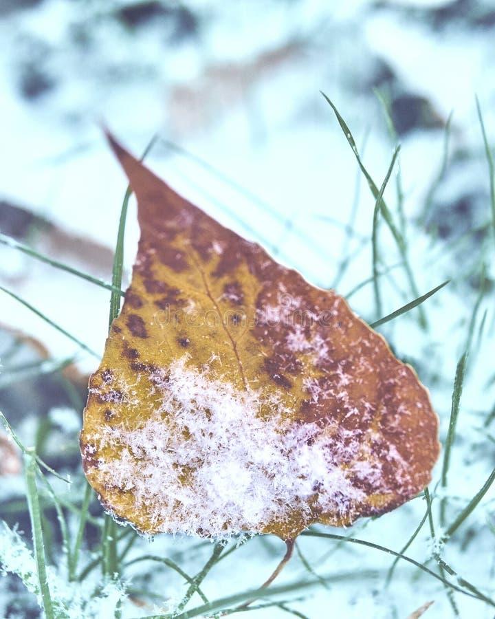 Foglie morte coperte da neve immagini stock libere da diritti