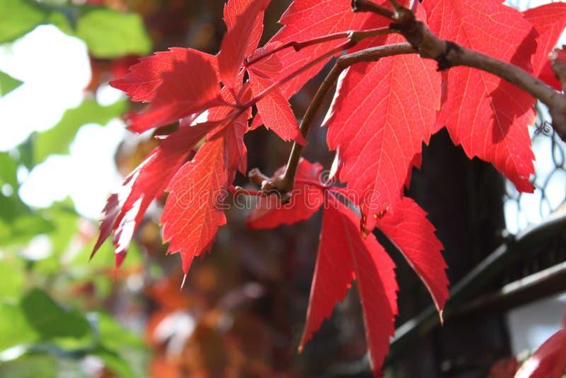 Foglie multicolori della cobite Tavolozza di autunno, colori di autunno immagine stock