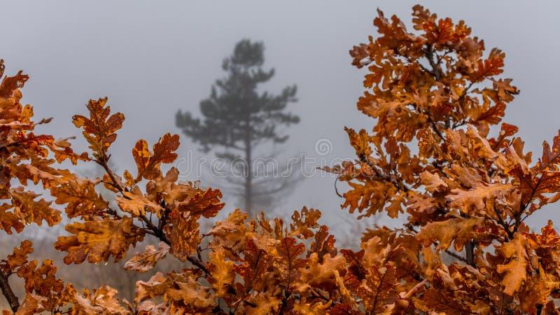 Foglie nebbiose di autunno fotografie stock