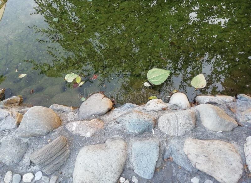 Foglie nel lago fotografia stock