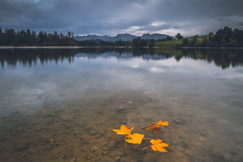 Foglie nel lago di autunno fotografia stock