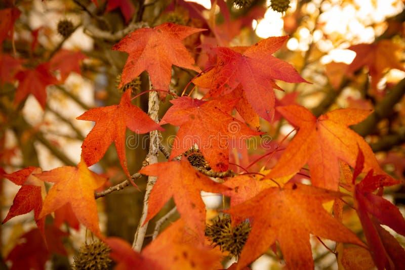 Foglie ocracee nella foresta all'autunno immagine stock libera da diritti