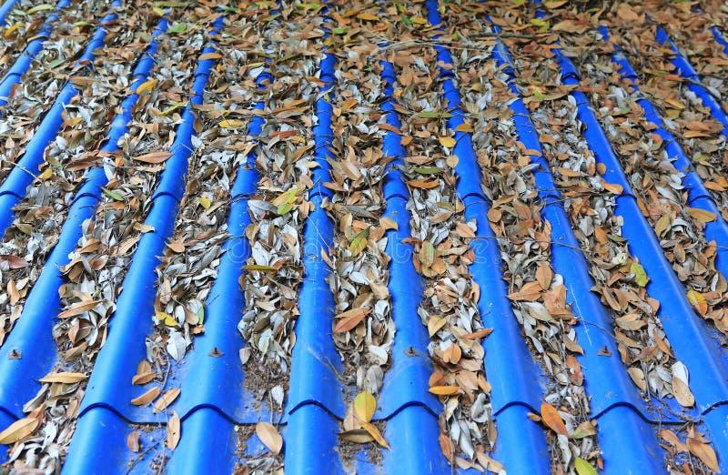 Foglie secche cadute sul tetto delle mattonelle blu immagine stock libera da diritti