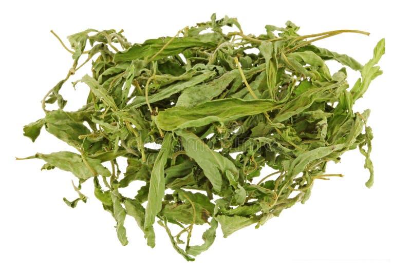 Foglie secche di stevia & x28; foglia dolce, leaf& x29 dello zucchero; un dolcificante e un sug immagini stock