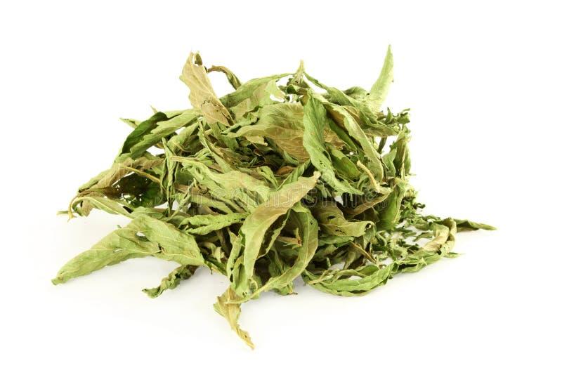 Foglie secche di stevia rebaudiana su fondo bianco fotografie stock libere da diritti