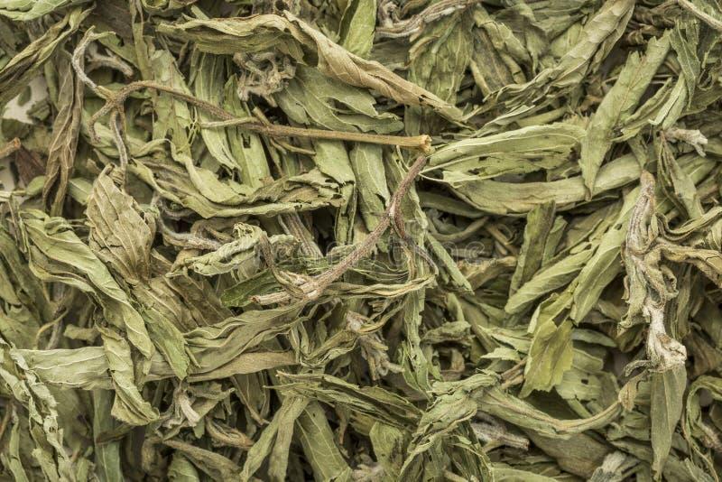 Foglie secche stevia fotografie stock