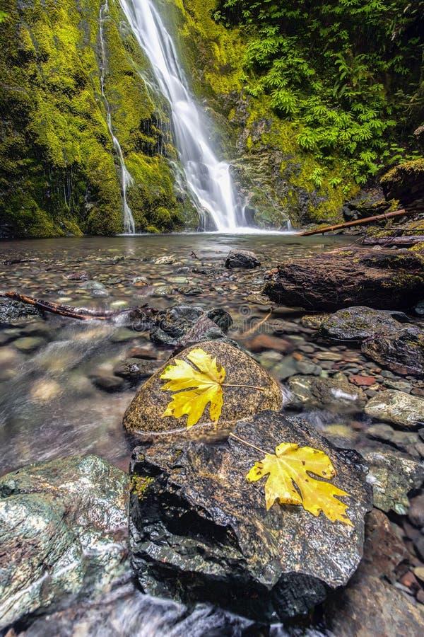 Foglie su roccia a Madison Falls immagine stock libera da diritti