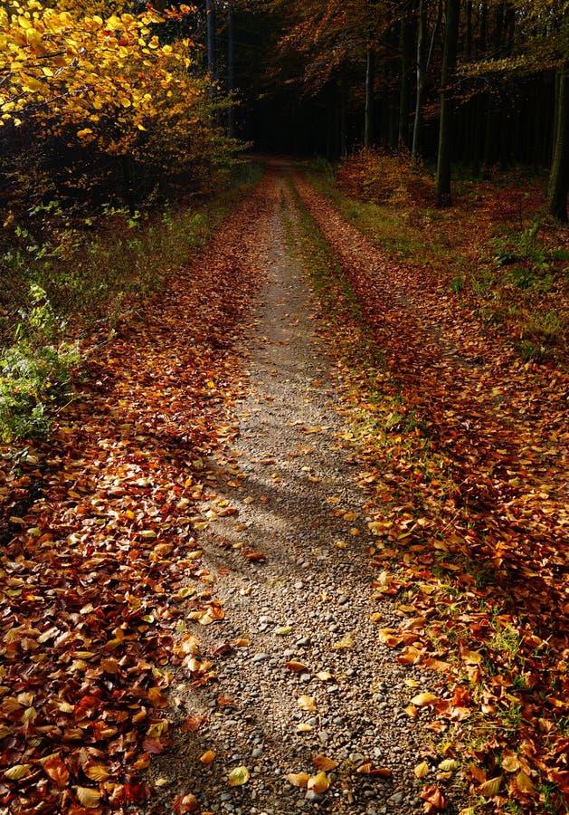 Foglie su un sentiero nel bosco immagine stock libera da diritti