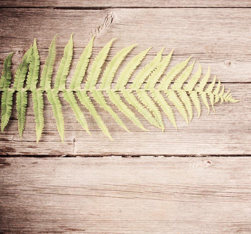 Foglie sui vecchi precedenti di legno fotografia stock libera da diritti