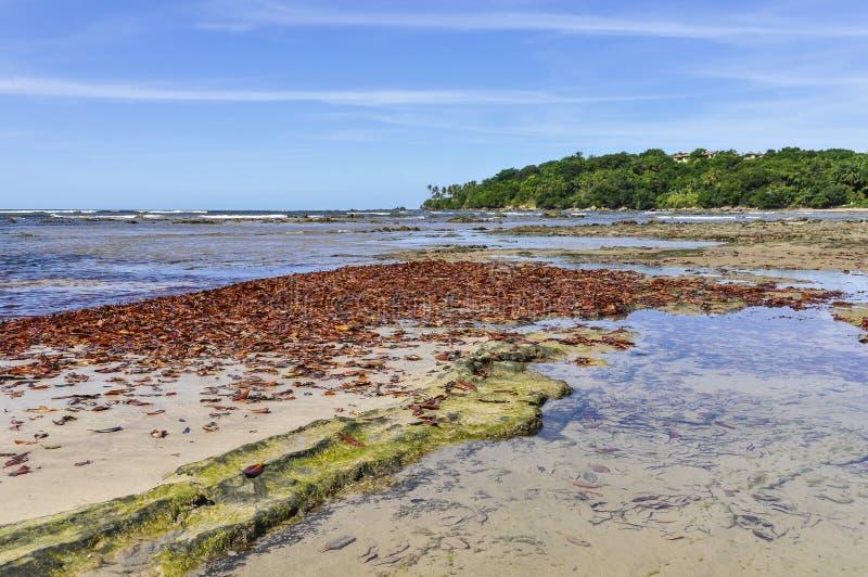 Foglie sulla spiaggia, nell'isola Salvador di Boipeba, il Brasile fotografie stock libere da diritti