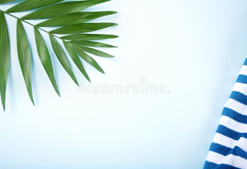 Foglie tropicali con l'asciugamano di spiaggia a strisce sul fondo di bluu Concetto minimo Disposizione piana Copi lo spazio immagine stock libera da diritti