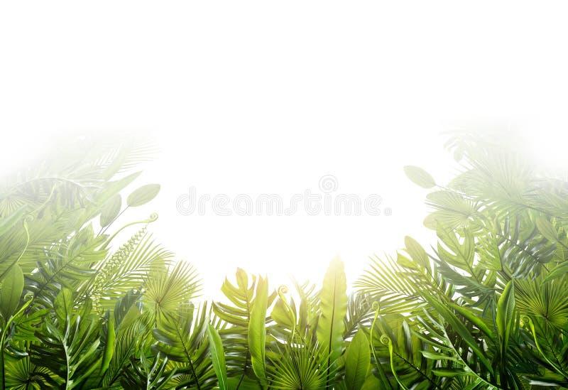 Foglie tropicali di estate per l'insegna ed il fondo immagine stock