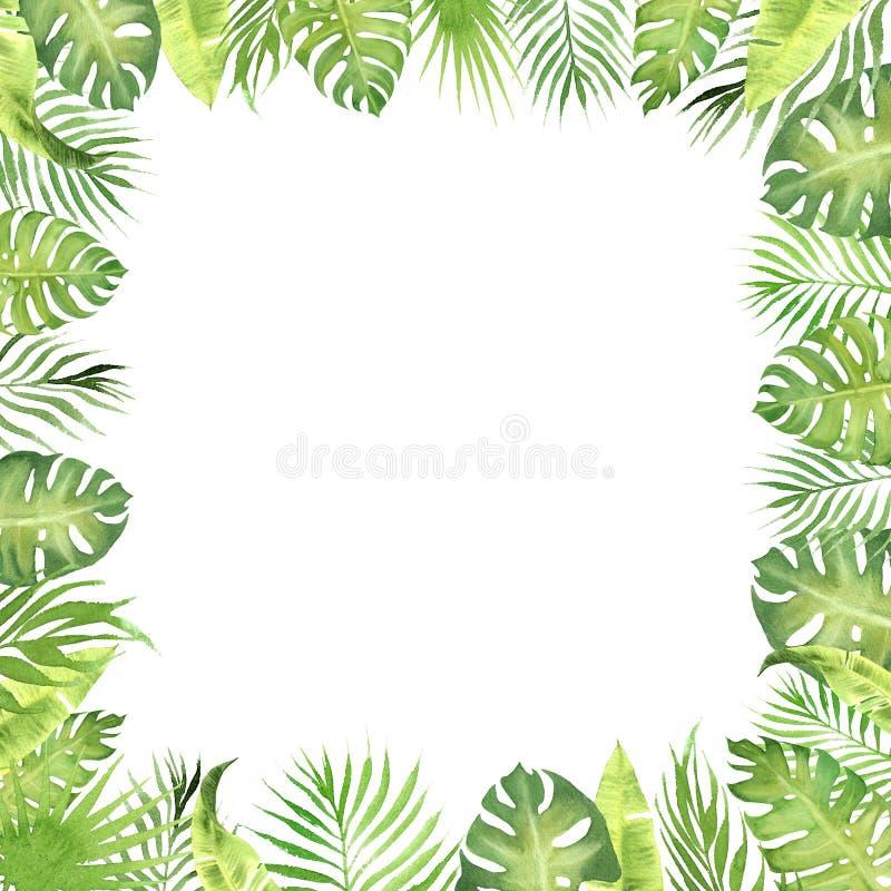 Foglie tropicali di verde della struttura del confine dell'acquerello monstera, foglie della palma, foglie del banano illustrazione vettoriale