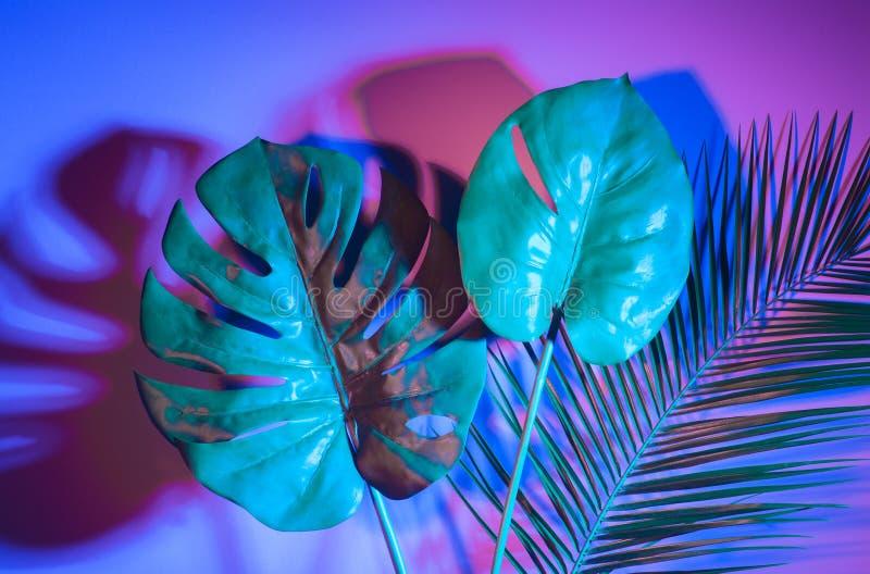 Foglie tropicali Monstera e palma nei colori olografici di pendenza audace vibrante Arte di concetto Surrealismo minimo fotografie stock