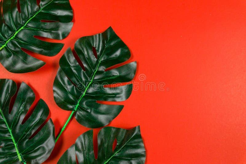 Foglie tropicali Monstera su fondo rosso Disposizione piana, vista superiore immagine stock libera da diritti