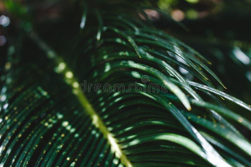 Foglie tropicali verdi su una luce solare di mattina immagini stock