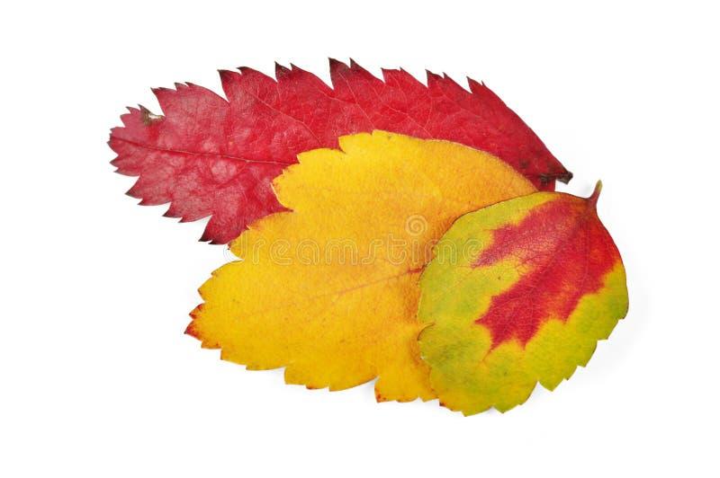 Foglie variopinte di autunno immagine stock libera da diritti