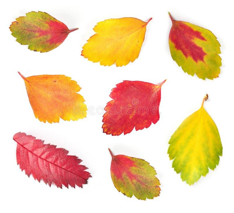 Foglie variopinte di autunno fotografia stock