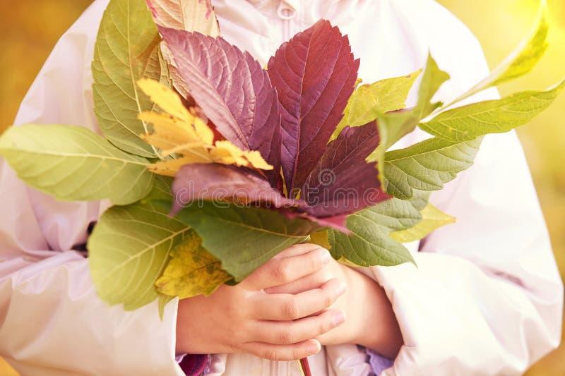 Foglie variopinte di autunno alle mani Rosso, verde, colore giallo fotografia stock libera da diritti
